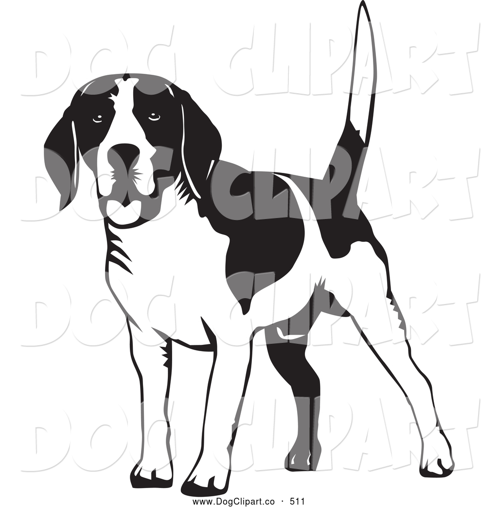 Collection of free download. Beagle clipart beagle hunting