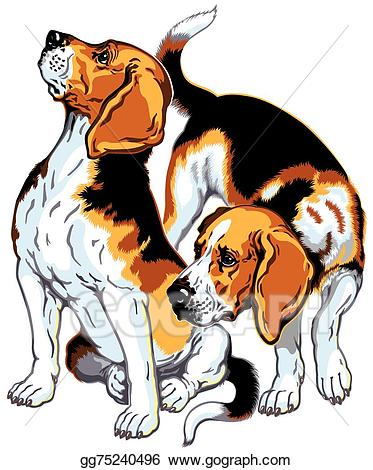 Vector illustration beagles stock. Beagle clipart beagle hunting