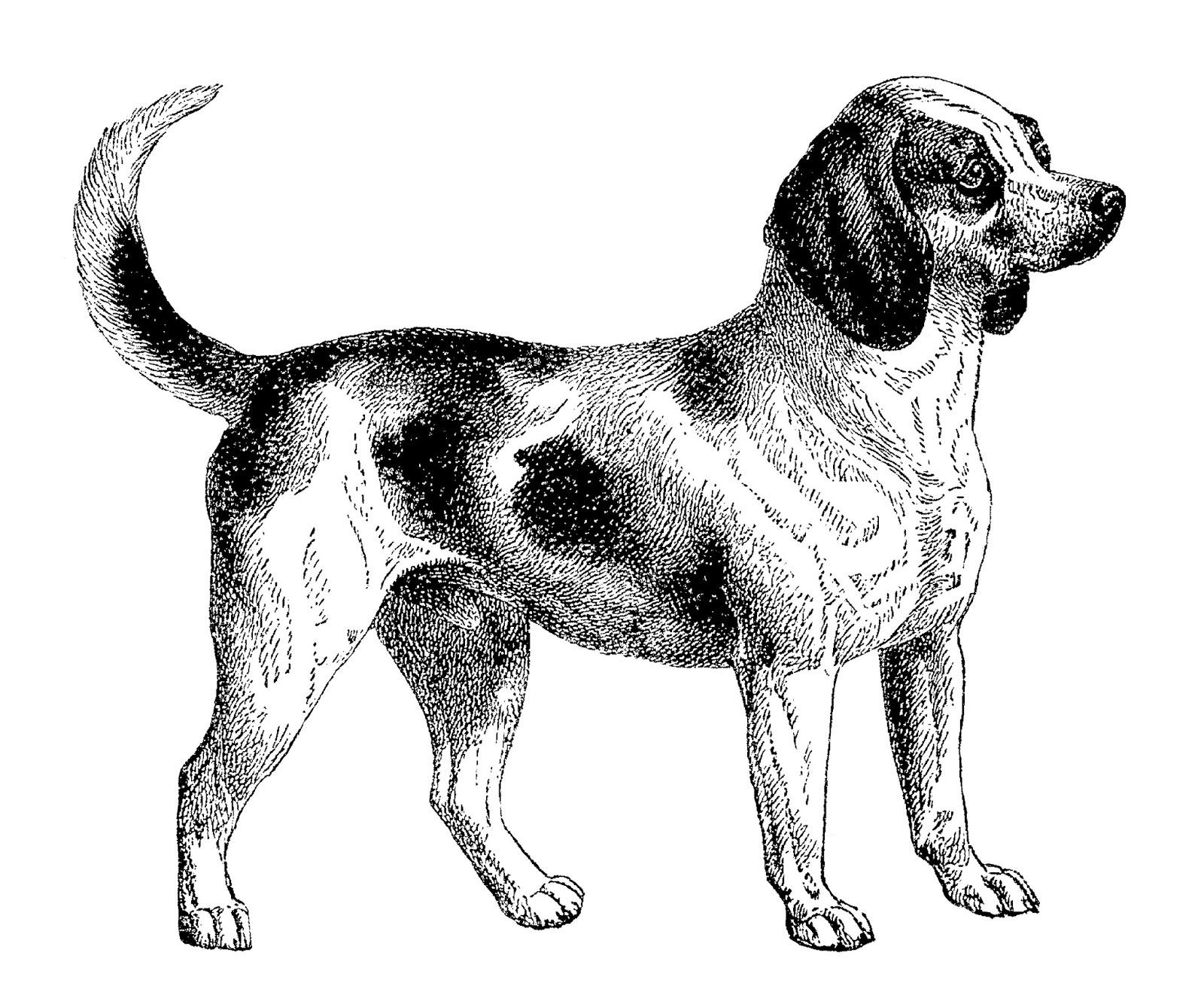 Beagle clipart beagle line. Antique images digital download