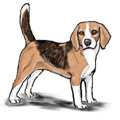 beagle clipart beagle puppy