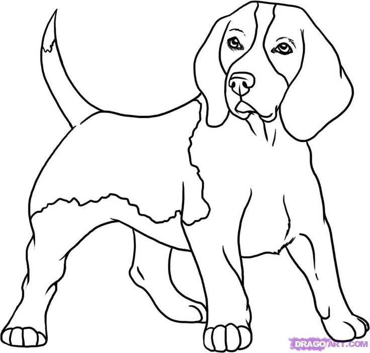 Coloring pages to download. Beagle clipart black and white
