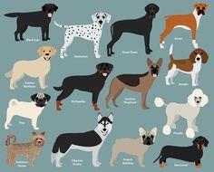 Hound dog clip art. Beagle clipart bloodhound