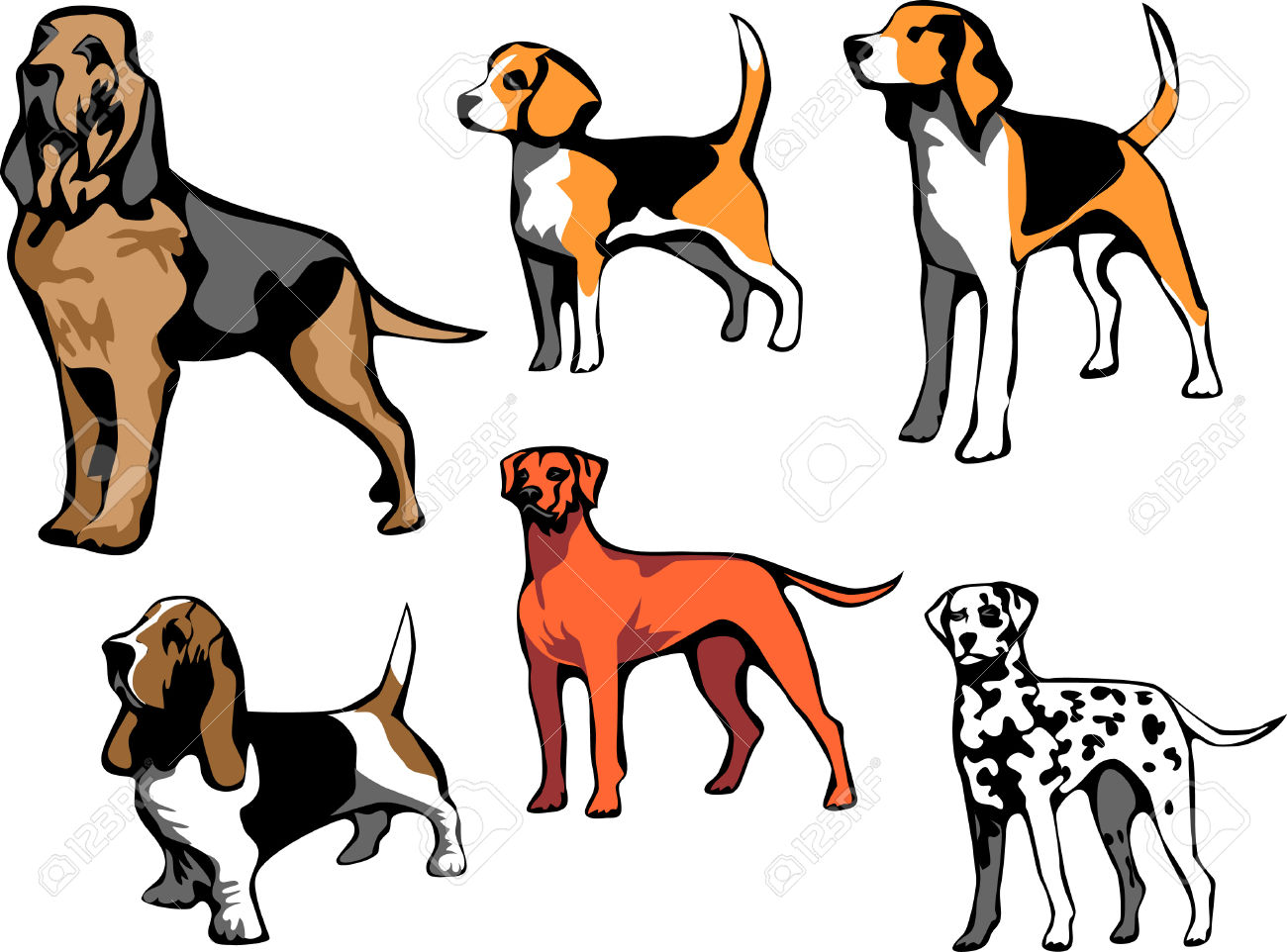 Pencil and in color. Beagle clipart bloodhound