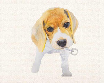 Watercolor etsy dogdogbeagle dog. Beagle clipart brittany spaniel