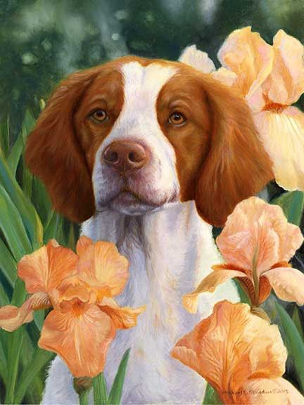Beagle clipart brittany spaniel.  best images on