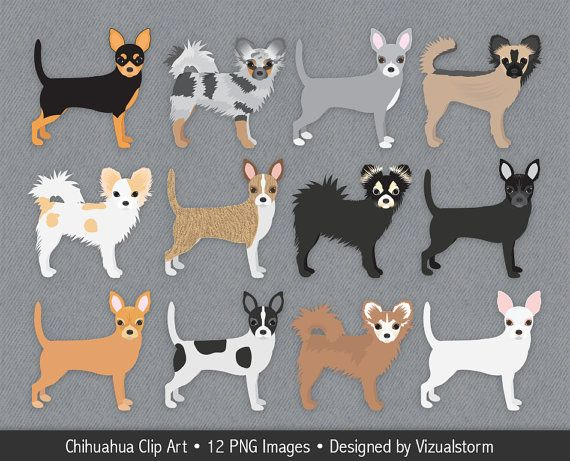 Beagle clipart chiwawa. Chihuahua clip art digital