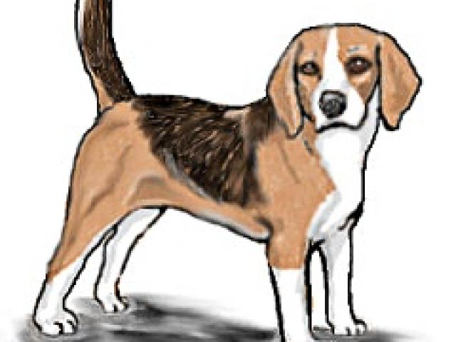 Art house pictures free. Beagle clipart cute
