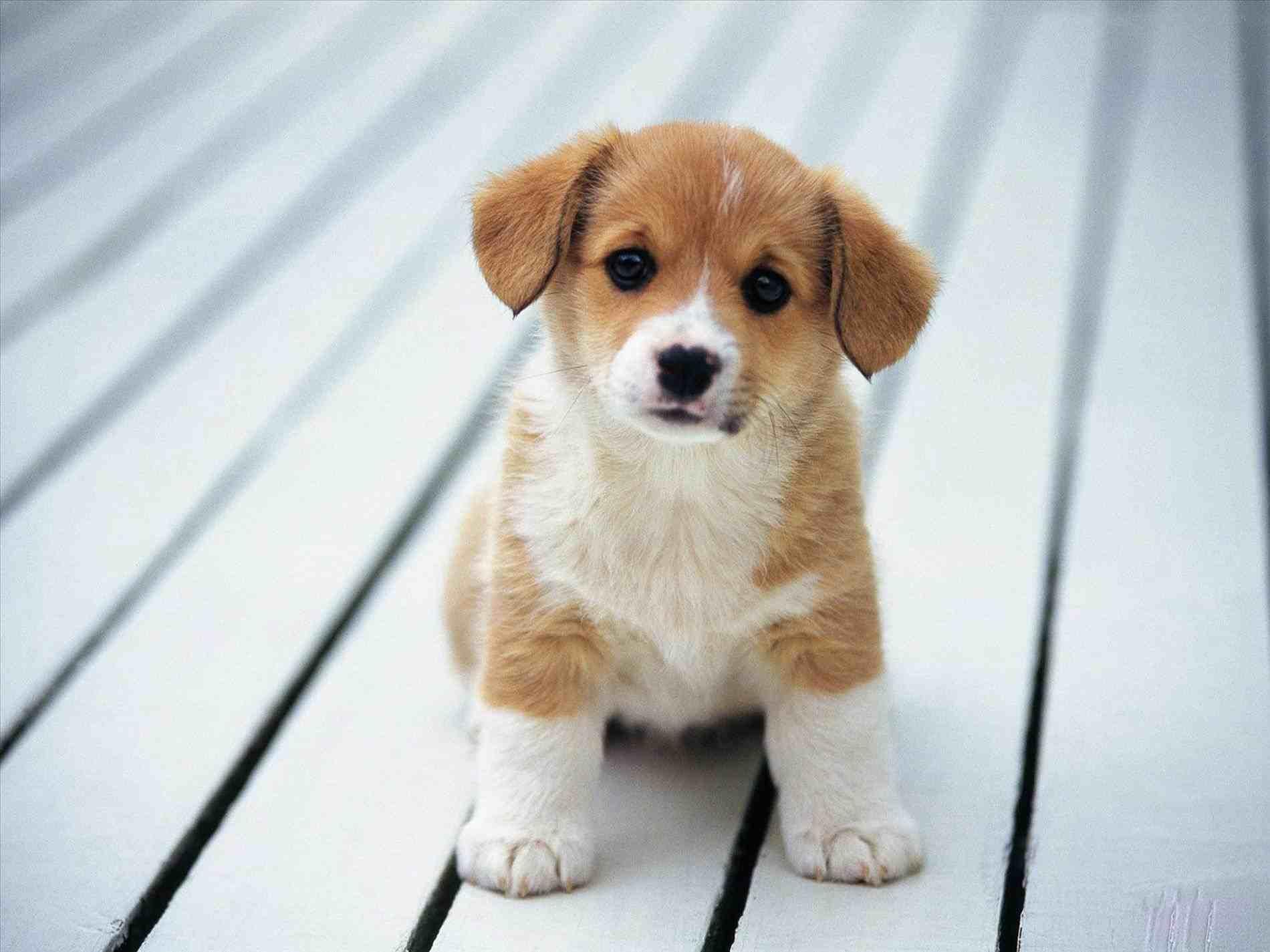 Cute animalsee club dog. Beagle clipart cutedog
