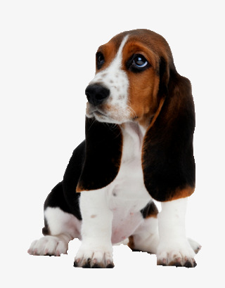 Beagle clipart cutedog. Cute dog material miguel