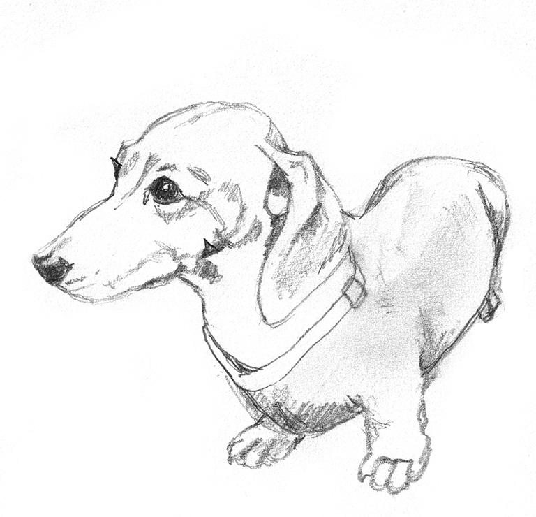Line drawing at getdrawings. Beagle clipart cutedog