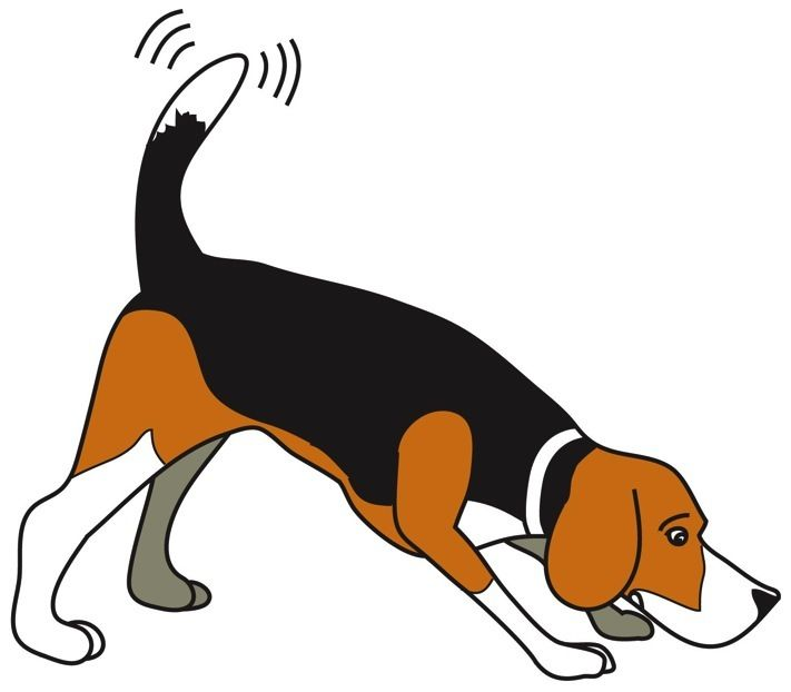 Collection of free download. Beagle clipart cutedog