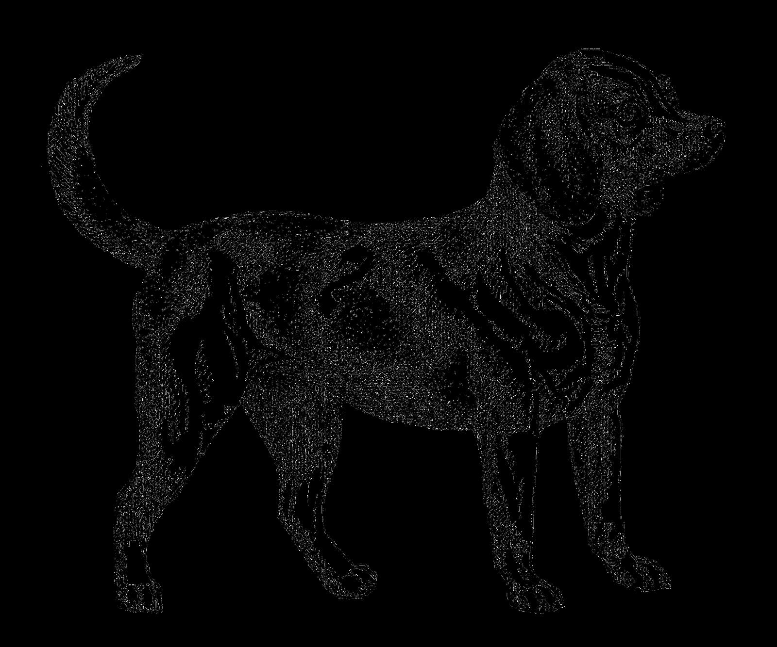 Beagle clipart dogl. Dog drawing at getdrawings
