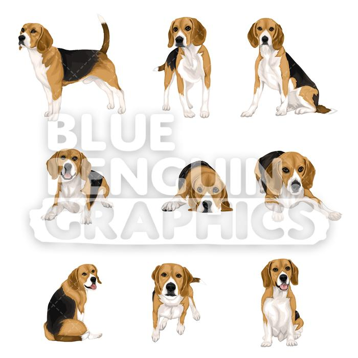 Dog bundle set vector. Beagle clipart dogl