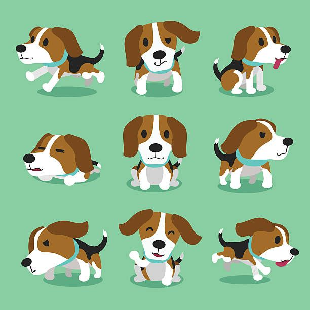 Beagle clipart dry dog.  best pets images