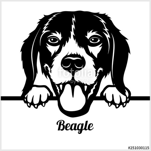 Peeking dogs breed head. Beagle clipart face