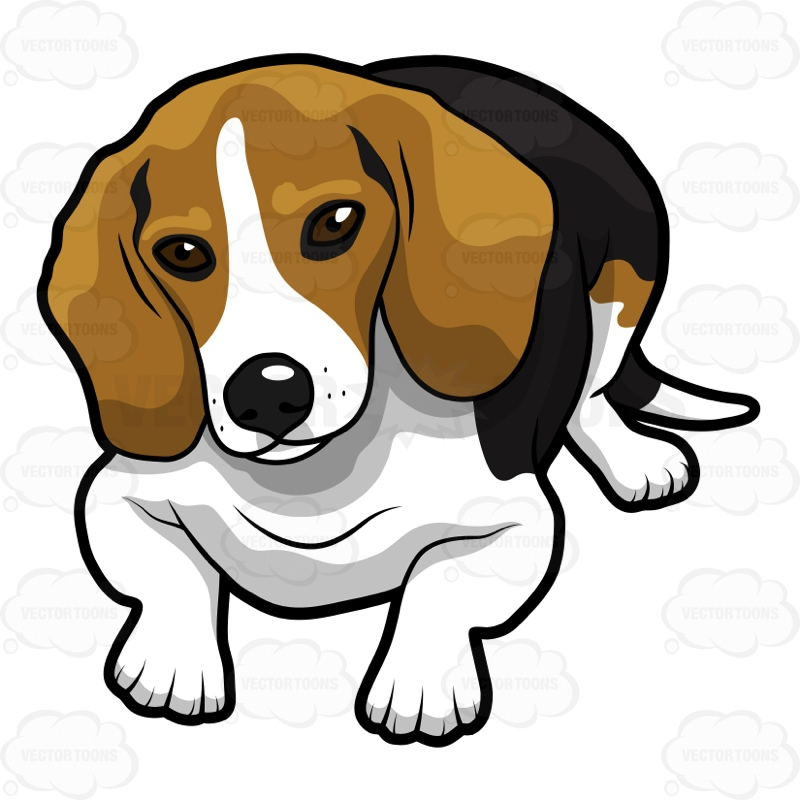 Pencil and in color. Beagle clipart face