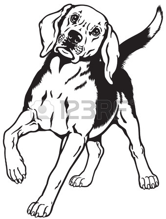 Beagle clipart head. Dog drawing at getdrawings