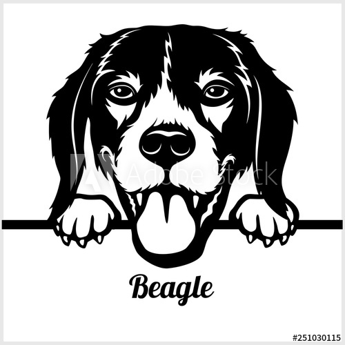 Beagle clipart head. Peeking dogs breed face