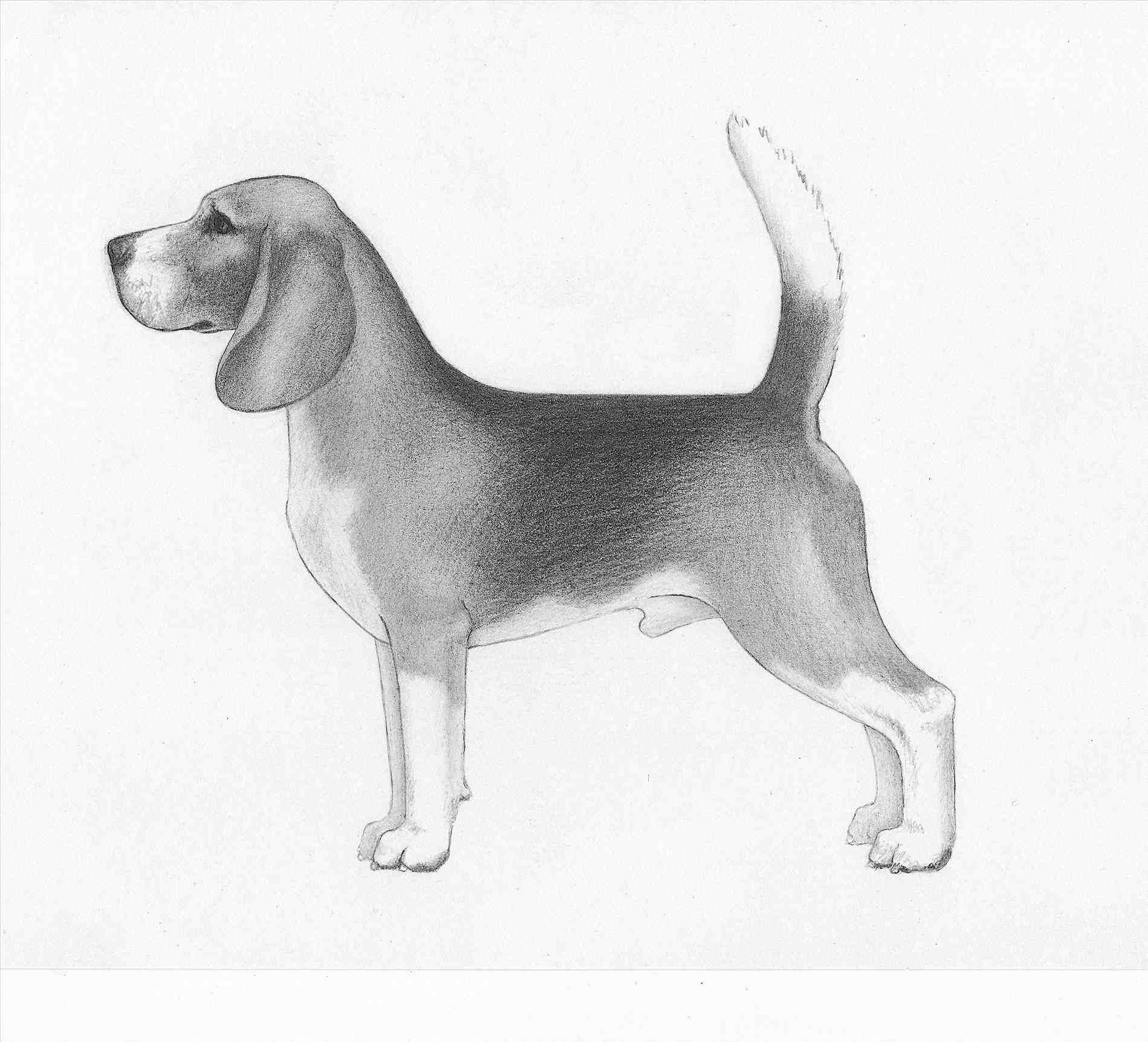 Beagle clipart lost dog. Outline silhouette clip art