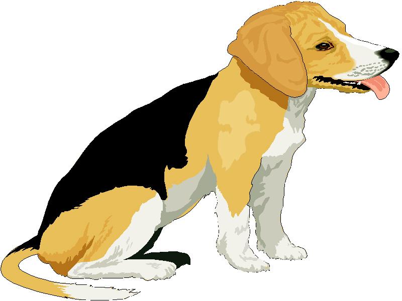 beagle clipart lost pet
