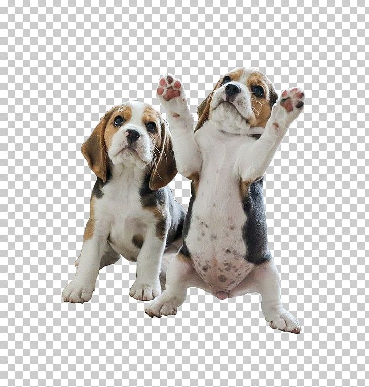 Pocket puppy your beagles. Beagle clipart one dog