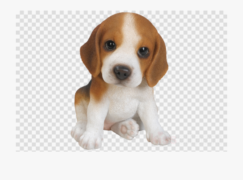 Beagle clipart one dog. Transparent image table of