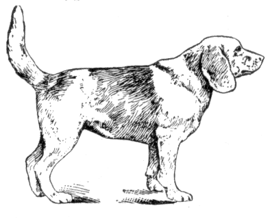 Free dog pages of. Beagle clipart public domain