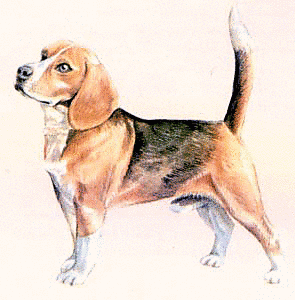 Beagle clipart puppie. Free dog pages of