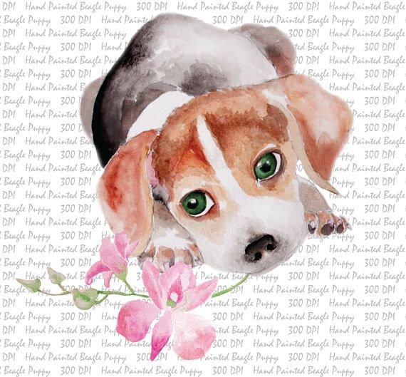 Hand painted watercolor dog. Beagle clipart puppyclip