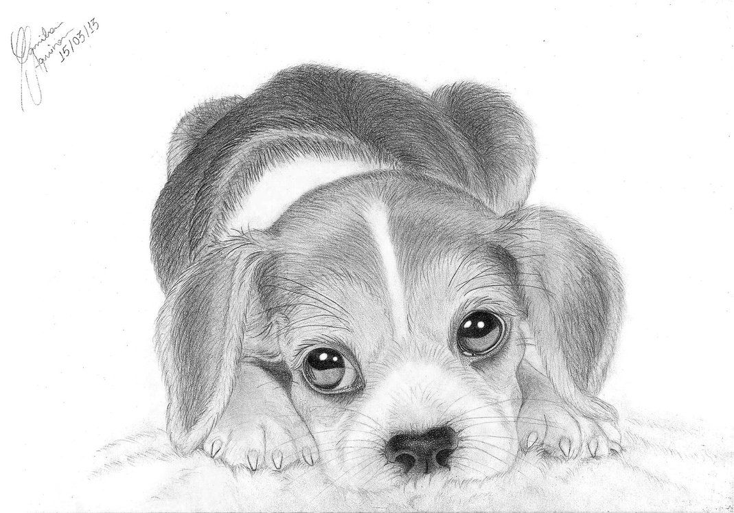 Beagle clipart realistic. Images for how to