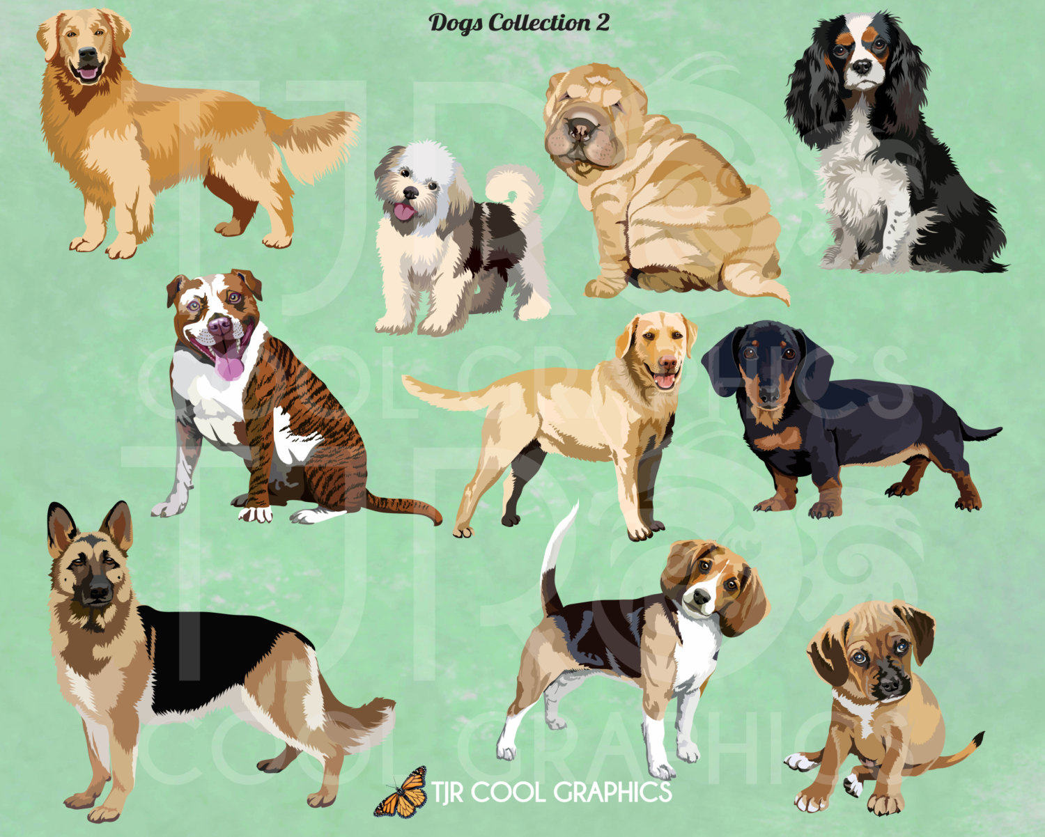 Dogs set digital clip. Beagle clipart realistic