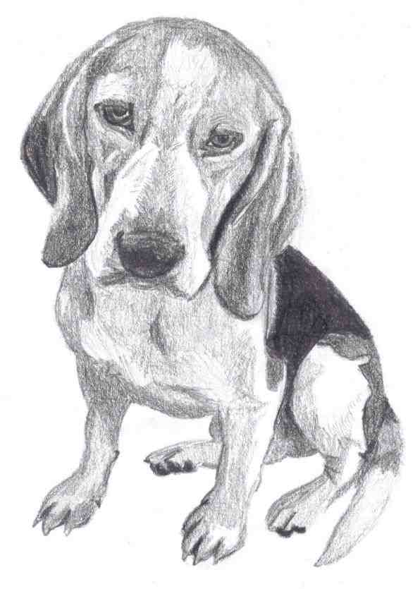 Beagle clipart realistic. Black dachshund mix of