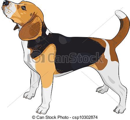 X free clip art. Beagle clipart realistic