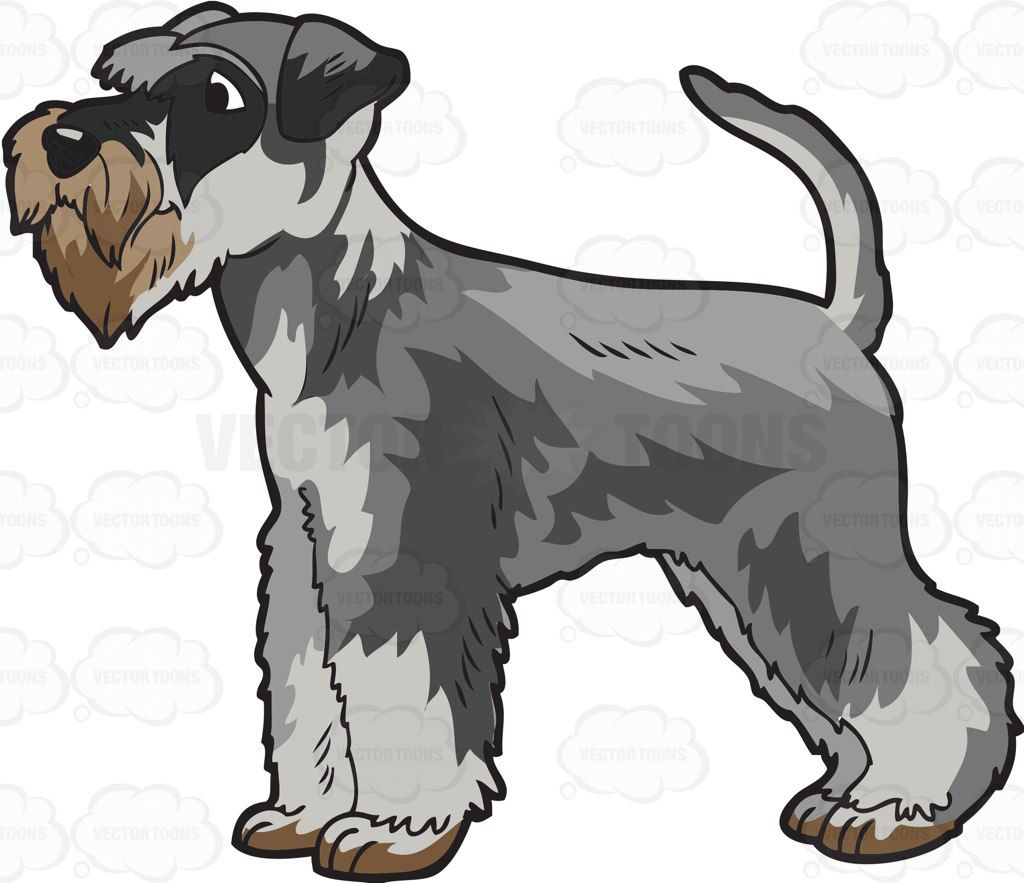 A cute miniature companion. Beagle clipart schnauzer