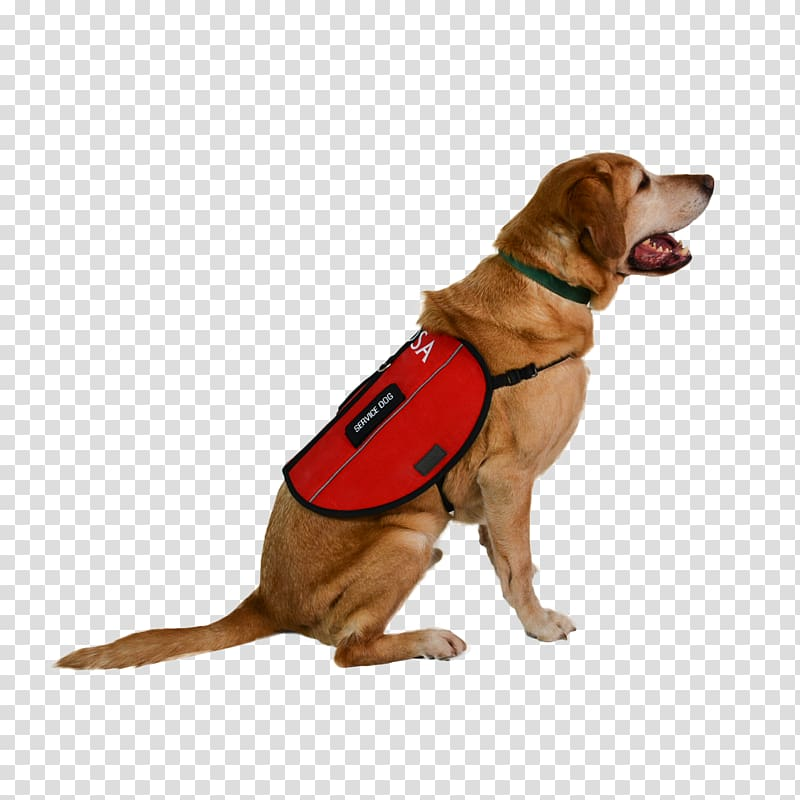 Beagle clipart service dog. Harness leash emotional support
