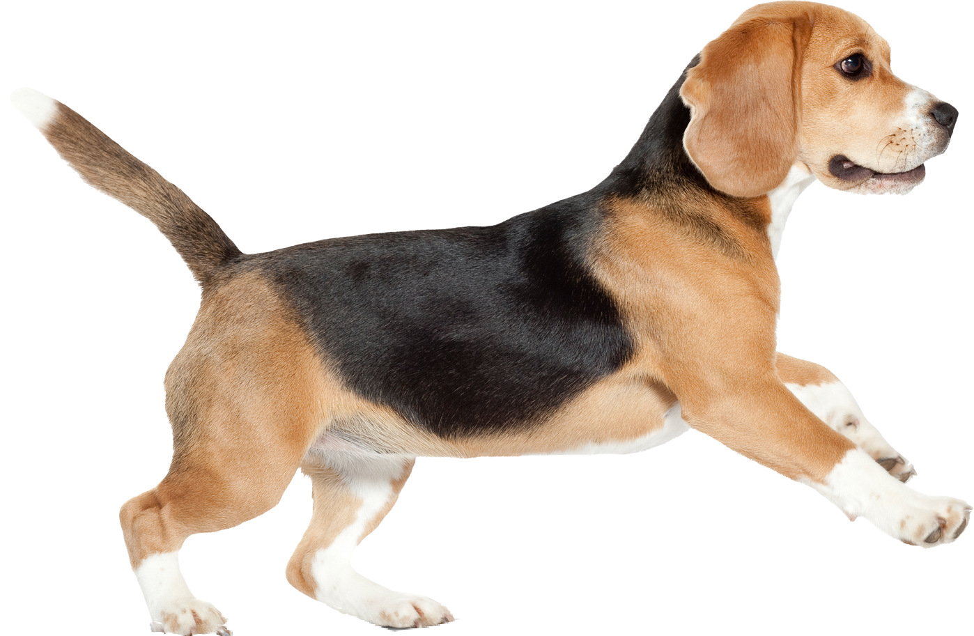Dogs clipart free download on WebStockReview