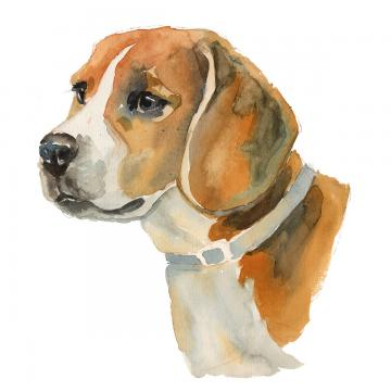 Png psd and with. Beagle clipart vector
