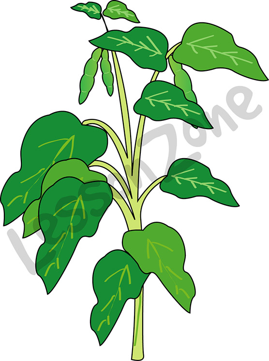 Plant . Bean clipart animated