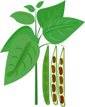 Free vegetables clip art. Bean clipart bean plant