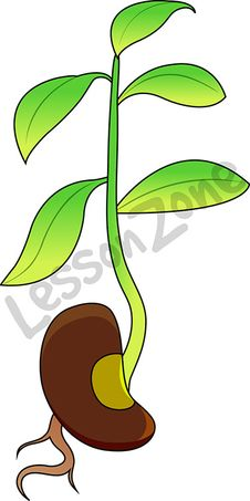 Bean clipart bean plant. Free download best