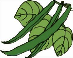 Beans clipart green bean. Free string cliparts download