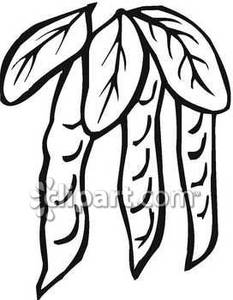 Beans clipart bean pod. Hanging black and white