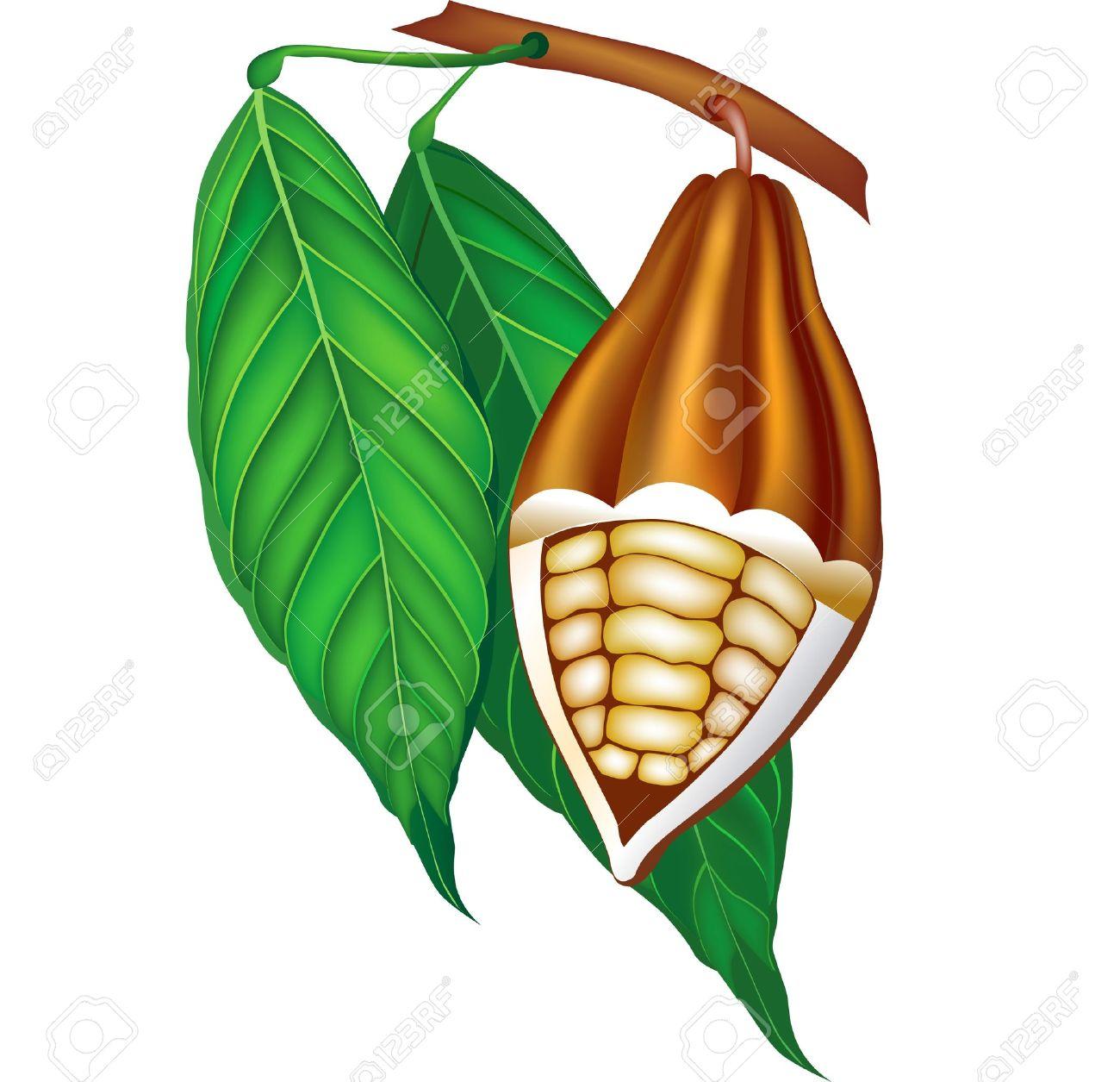 Bean clipart bean pod.  collection of cocoa