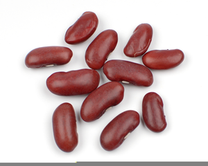 Bean clipart beens. Pinto free images at