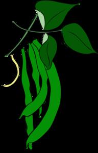 Bean clipart beens. Green beans clip art