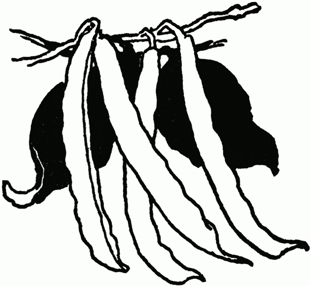 Unique of green beans. Bean clipart black and white