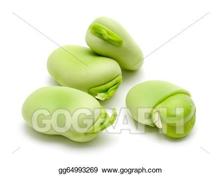 Beans clipart broad bean. Stock illustration gg gograph