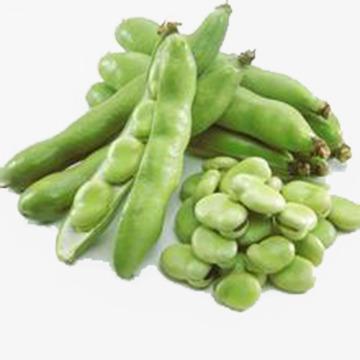 Green beans food png. Bean clipart broad bean