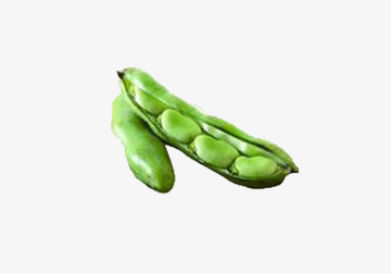 Green beans blue fresh. Bean clipart broad bean