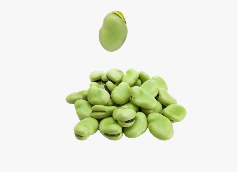 Peas beans png free. Bean clipart broad bean